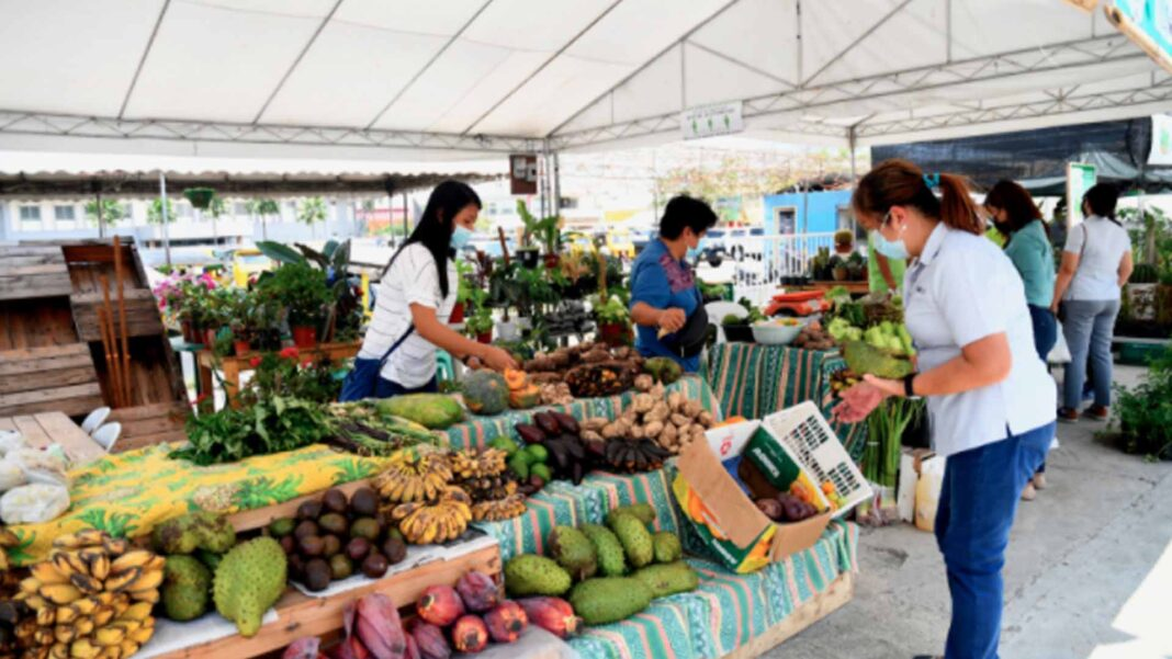 Damosa Land Bolsters Farm-To-Community Efforts To Aid in Recovery of Davao's Workforce